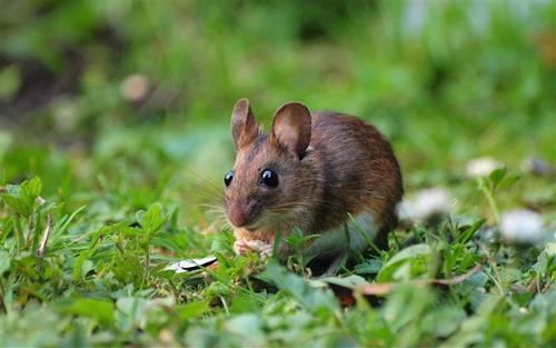 【小老鼠的经典儿童故事精选】 小老鼠的故事儿童
