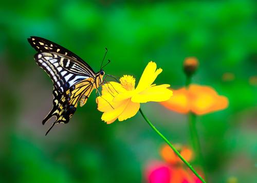 有关蝴蝶的小故事【关于蝴蝶的儿童故事】